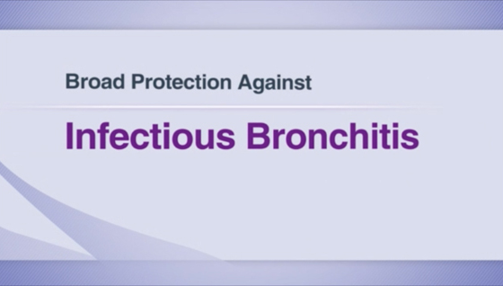 MSD Infectious Bronchitis Seminar Video.jpg